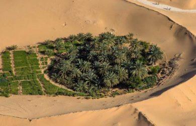 Valorisation des terres sahariennes: près de 170.000 ha proposés aux investisseurs agricoles